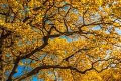 Autunm träd i parkera, gör perfekt nedgånglandskap arkivbilder