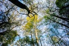 Autunm trees Stock Image