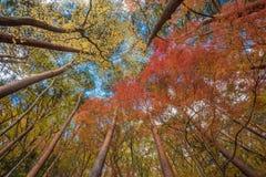 Autunm trees Royalty Free Stock Photos