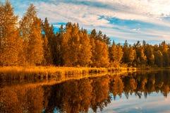 Autunm trees Royalty Free Stock Photo