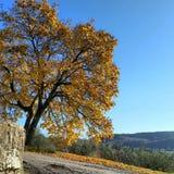 Autunno秋天意大利佛罗伦萨Borgosanlorenzo意大利托斯卡纳vicchio树 库存图片