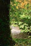 Autunno al giardino botanico Fotografie Stock Libere da Diritti