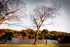 Autunno al giardino di Sankien, Yokohama, Giappone Fotografie Stock Libere da Diritti