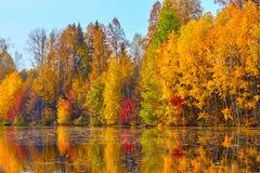 Autunno, alberi gialli, acqua Fotografia Stock Libera da Diritti