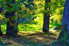 Autunno, alberi, natura Fotografia Stock