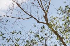 Autunno - albero con le foglie cadute Immagine Stock