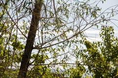 Autunno - albero con le foglie cadute Fotografia Stock