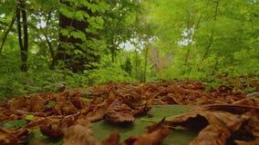 Autunno in anticipo, angolo basso, movimento lento con il fondo della foresta della natura archivi video