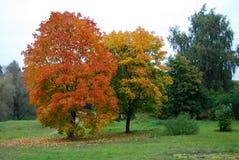 Autunno arancio Fotografia Stock Libera da Diritti