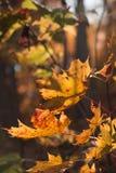 Autunno arancio fotografie stock