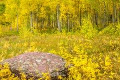 Autunno Aspen Fotografia Stock Libera da Diritti