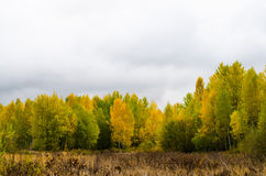 Autunno, autunnale, giallo, legno, fogliame, fondo, botanica Immagine Stock Libera da Diritti