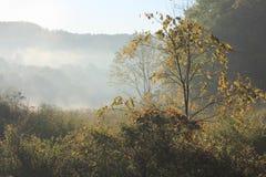 Autunno bello di mattina nell'Ohio Immagini Stock