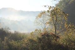 Autunno bello di mattina nell'Ohio Fotografia Stock