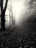 Autunno - bianco e nero Immagini Stock