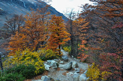 Autunno/caduta in Parque Nacional Torres del Paine, Cile Fotografia Stock Libera da Diritti