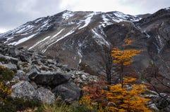 Autunno/caduta in Parque Nacional Torres del Paine, Cile Immagine Stock Libera da Diritti