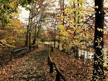 Autunno in Central Park Immagine Stock Libera da Diritti