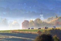 Autunno che pasce nella nebbia di primo mattino Immagini Stock Libere da Diritti
