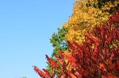 Autunno colorato in parco fotografie stock