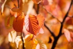 Autunno Colourful immagine stock libera da diritti