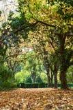Autunno con le foglie variopinte al giardino botanico Fotografie Stock Libere da Diritti