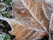 Autunno congelato Fotografia Stock