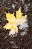Autunno contro Inverno Fotografia Stock Libera da Diritti
