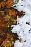 Autunno contro Inverno Fotografie Stock Libere da Diritti