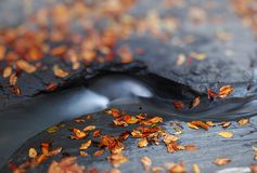 Autunno dal ruscello, profondità di campo bassa, bella sfuocatura Fotografie Stock Libere da Diritti