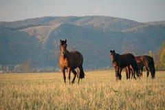 Autunno del campo del cavallo Immagini Stock Libere da Diritti