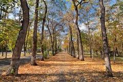 Autunno del parco dell'albero di paesaggio immagine stock libera da diritti