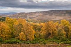 Autunno del parco nazionale di Cairngorms Fotografia Stock