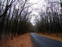 Autunno della foresta la strada ed intorno alla curvatura Fotografia Stock