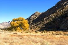 Autunno della valle della montagna Fotografia Stock