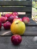 Autunno delle mele Immagine Stock Libera da Diritti