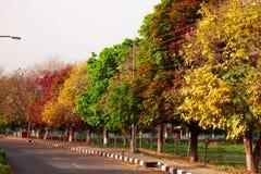 autunno di caduta Fotografia Stock Libera da Diritti