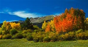Autunno 5 di Colorado Fotografia Stock