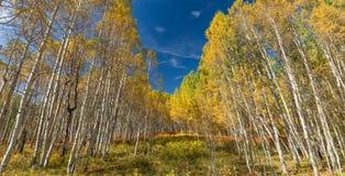 Autunno di Colorado Immagine Stock