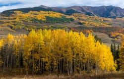 Autunno di Colorado Fotografie Stock Libere da Diritti
