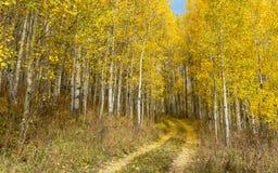 Autunno di Colorado Immagini Stock