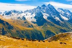 Autunno di giorno della montagna Immagini Stock Libere da Diritti