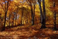 Autunno di paesaggio nella foresta Fotografie Stock Libere da Diritti