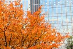 Autunno di Tokyo Fotografia Stock