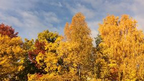 Autunno dorato stock footage