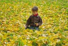 Autunno dorato Fotografia Stock
