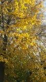 Autunno dorato Fotografia Stock Libera da Diritti