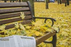 Autunno dorato Belle foglie di acero su un banco Immagini Stock