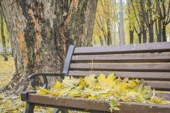 Autunno dorato Belle foglie di acero su un banco Fotografia Stock