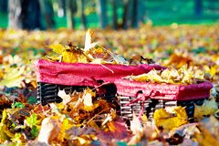 Autunno dorato in canestro di vimini Mucchio delle foglie di acero gialle Fotografie Stock